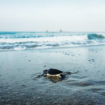 Sukomade Turtle Beach