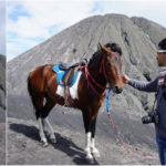 Horse riding in Mount Bromo