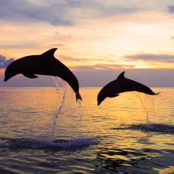 dolphin tour bali